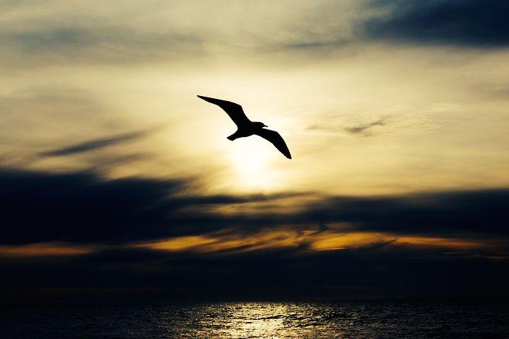 Kun henkinen älykkyys herää, näet maailman toisin.